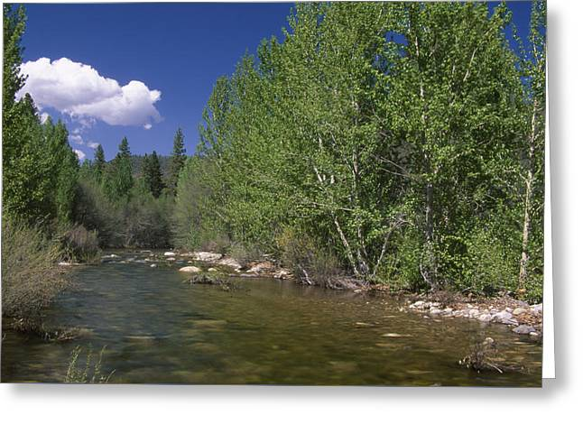 Forks Of Kern Greeting Card by Soli Deo Gloria Wilderness And Wildlife Photography