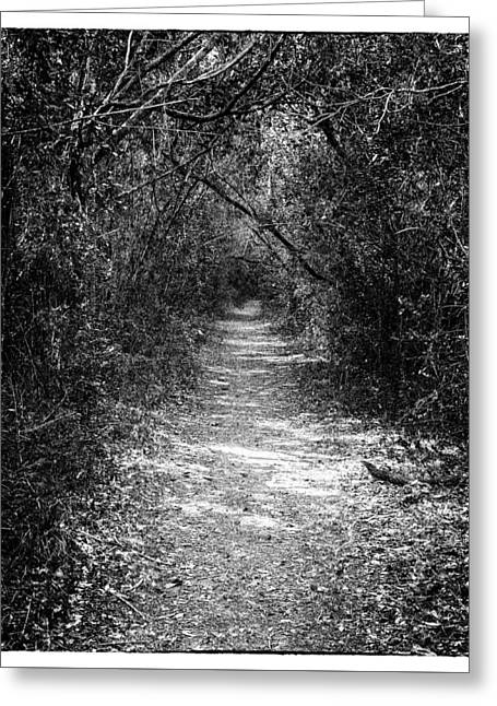 Forest Floor 0102bw Greeting Card