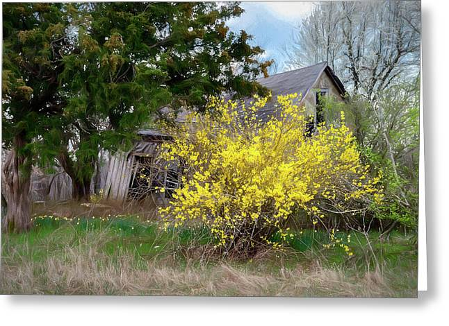Forsythia And Old House Greeting Card