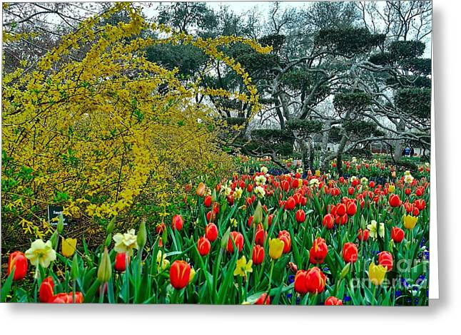 Greeting Card featuring the photograph Forsythia Tulips And Daffadils by Diana Mary Sharpton