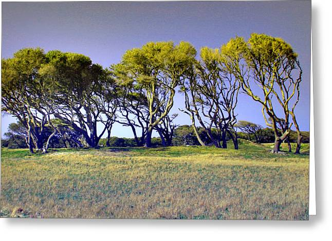 Greeting Card featuring the photograph Fort Fisher Trees by Phil Mancuso