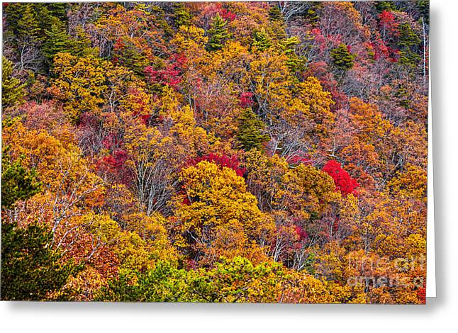 Fort Mountain State Park Cool Springs Overlook Greeting Card by Bernd Laeschke