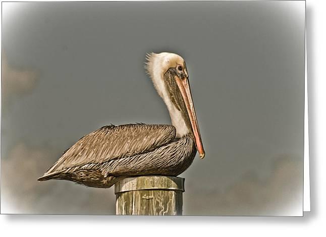 Fort Pierce Pelican Greeting Card