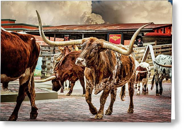 Fort Worth Stockyards Greeting Card by Kelley King
