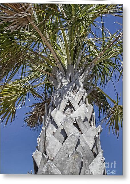 Fortified Foundation Palm Greeting Card