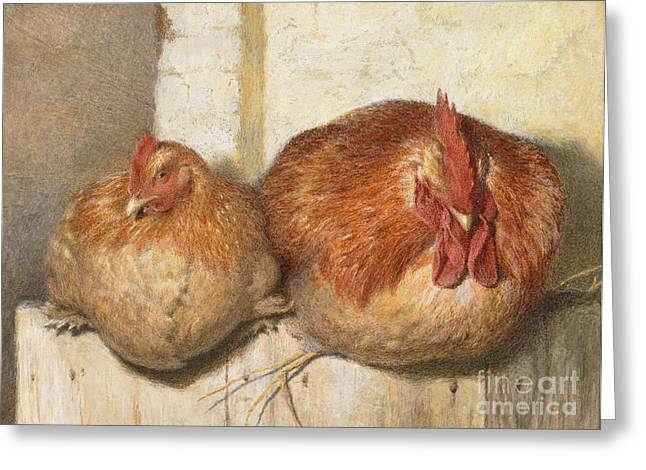 Cockerel Greeting Cards - Forty Winks Greeting Card by JG Marks