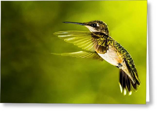 Forward Stroke - Hummingbird Greeting Card