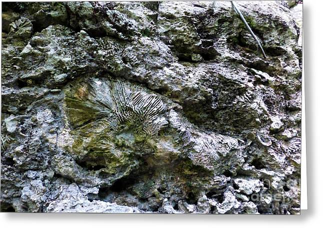 Greeting Card featuring the photograph Fossil In The Wall by Francesca Mackenney