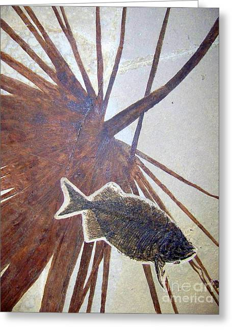 Fossil Greeting Card by Peyton Imes