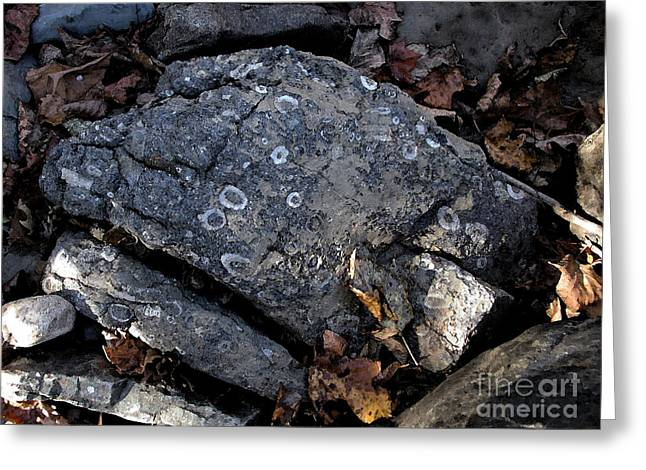 Fossil Rock At Richland Creek Greeting Card by Steve Grisham