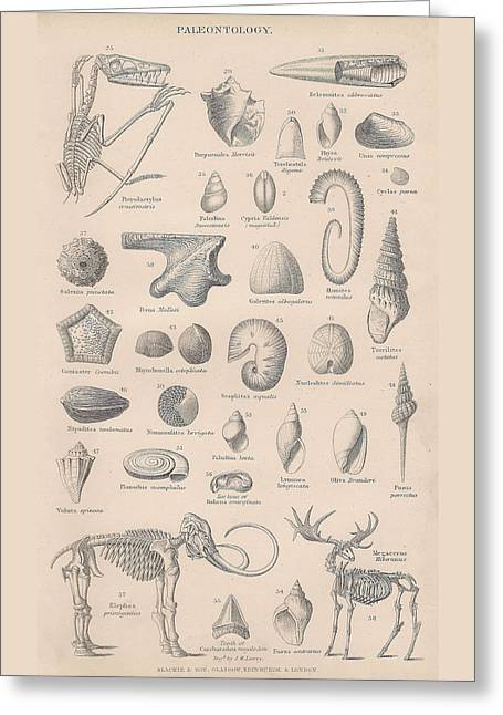 Fossils, Paleontology Greeting Card by Victorian Engraver