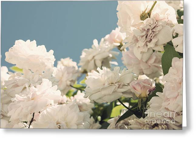 Fountains Of Roses Greeting Card