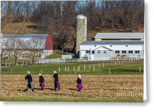 Four Amish Women In Field Greeting Card