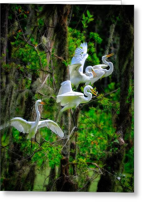 Greeting Card featuring the photograph Four Egrets by Harry Spitz