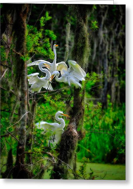 Greeting Card featuring the photograph Four Egrets In Tree by Harry Spitz