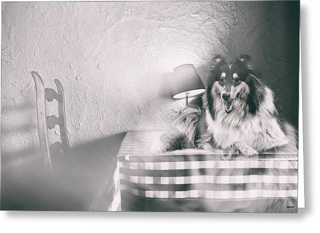Four Footed Dinner Guest Greeting Card