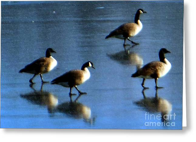 Four Geese Walking On Ice Greeting Card