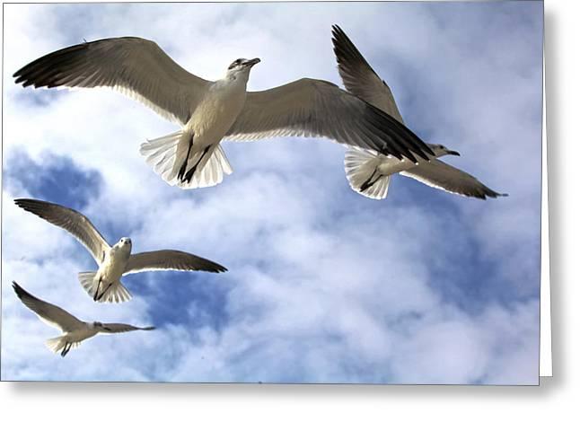 Four Gulls Greeting Card