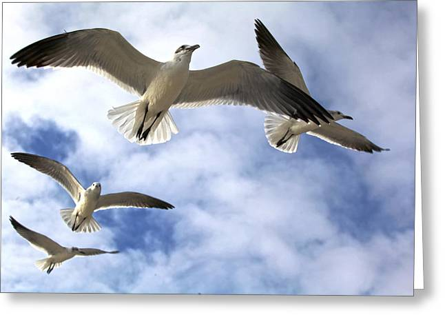 Four Gulls Greeting Card
