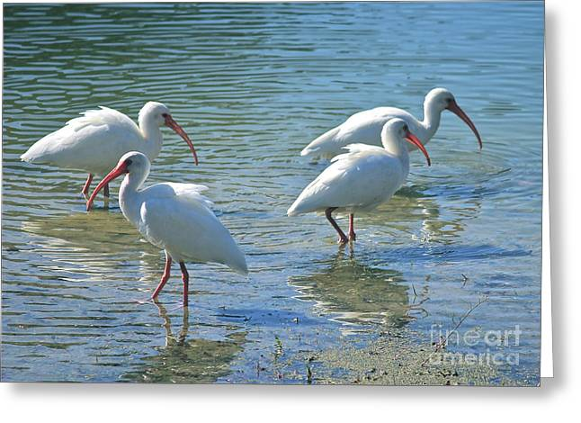 Four Ibises Greeting Card by Carol Groenen