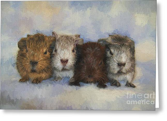 Four Little Guinea Pigs Greeting Card by Jutta Maria Pusl