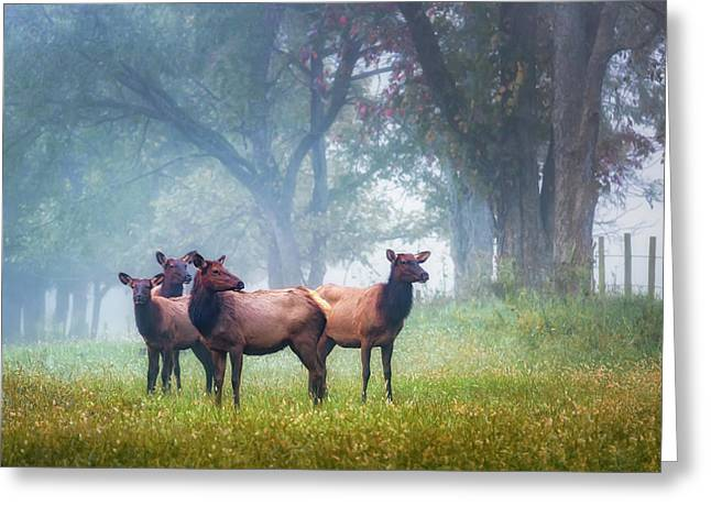 Greeting Card featuring the photograph Four Of A Kind by James Barber