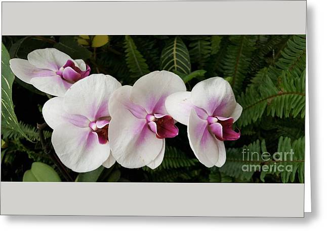 Four Orchid Friends Greeting Card by Jasna Gopic