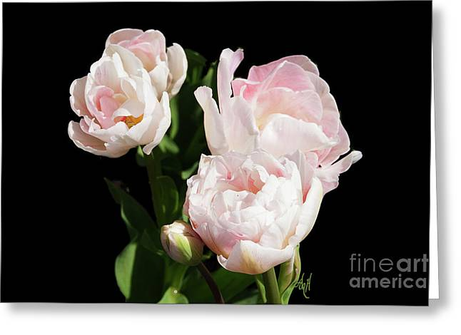 Four Pink Tulips And A Bud On Black Greeting Card