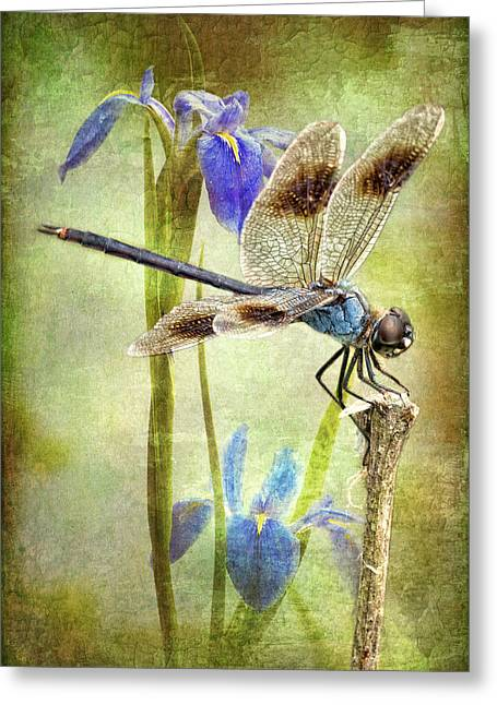 Blue And Brown Greeting Cards - Four Spotted Pennant and Louisiana Irises Greeting Card by Bonnie Barry