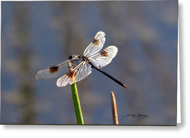 Greeting Card featuring the pyrography Four Spotted Pennant On A Reed by Sally Sperry