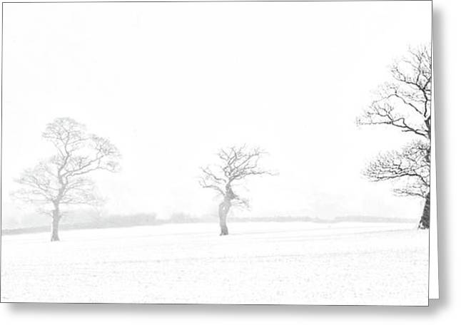Four Trees Farndale Greeting Card by Janet Burdon