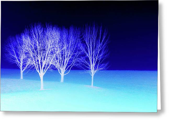Four Trees In Snow Greeting Card