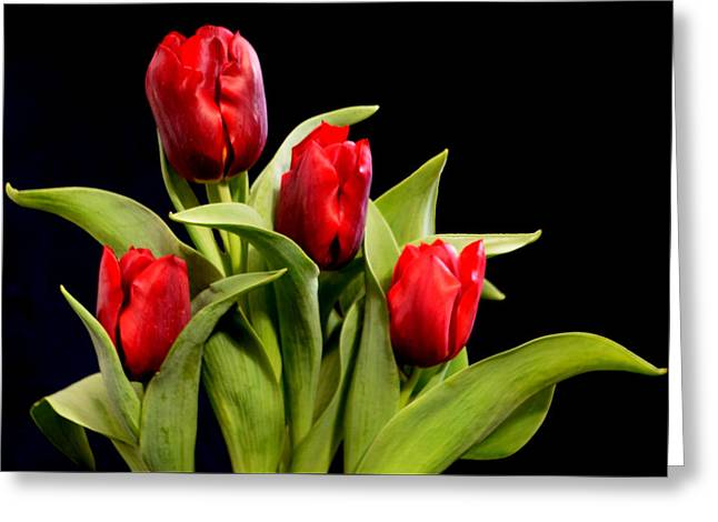Four Tulips Greeting Card
