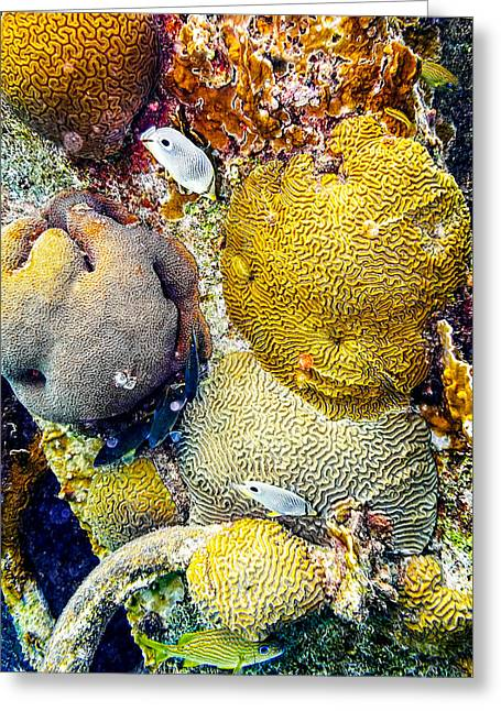 Greeting Card featuring the photograph Foureye Butterflyfish by Perla Copernik