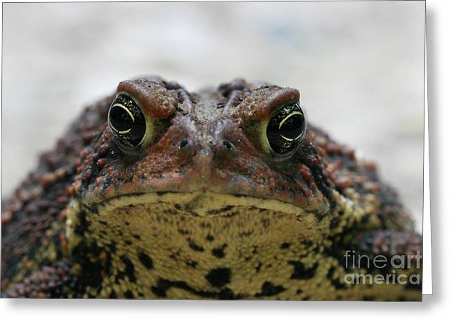 Fowler's Toad #3 Greeting Card