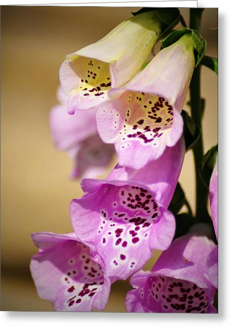 Fox Gloves Greeting Card by Bill Cannon