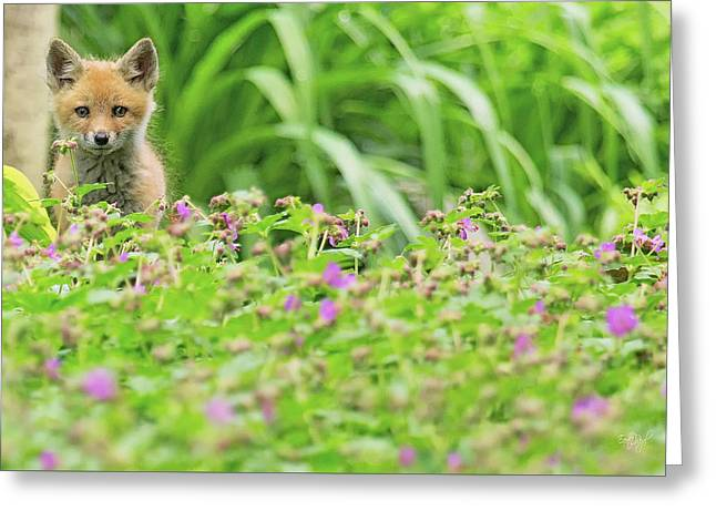 Fox In The Garden Greeting Card by Everet Regal
