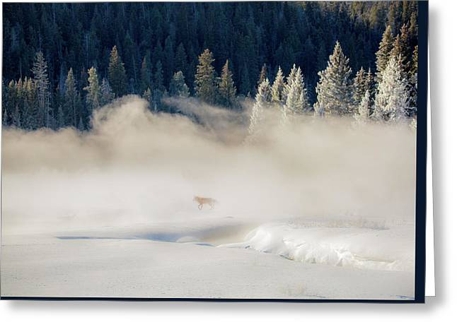 Fox In The Mist // Yellowstone National Park  Greeting Card
