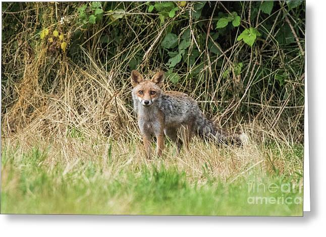 Fox In The Woods Greeting Card