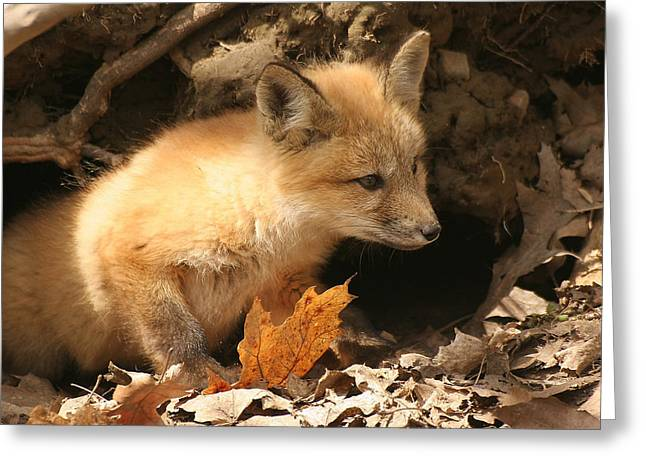 Greeting Card featuring the photograph Fox Kit At Entrance To Den by Doris Potter