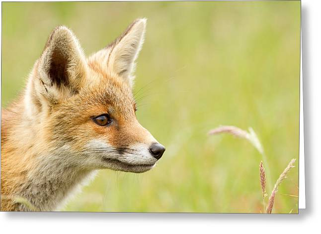 Fox Kit Dreams Greeting Card by Roeselien Raimond