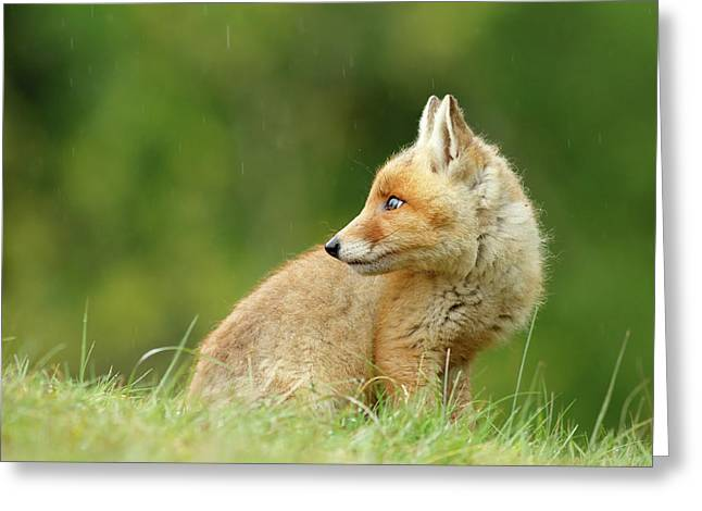 Fox Kit In A Summer Shower Greeting Card