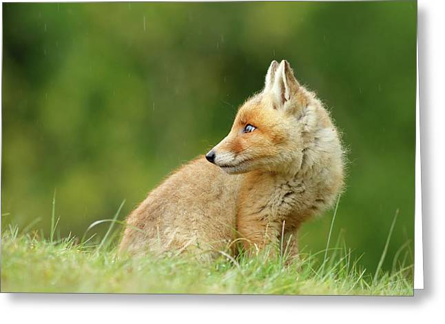 Fox Kit In A Summer Shower Greeting Card by Roeselien Raimond