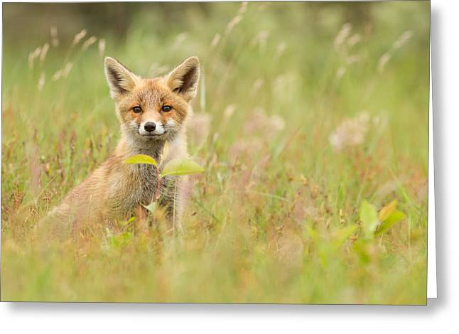 Fox Kit In The Filed Greeting Card