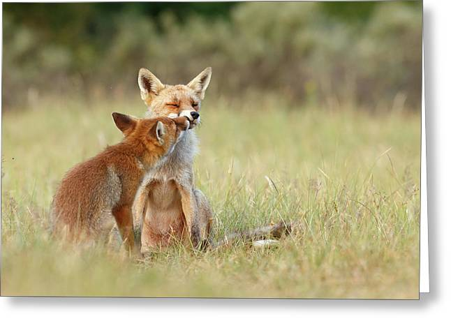 Fox Love Series - Kiss Greeting Card by Roeselien Raimond