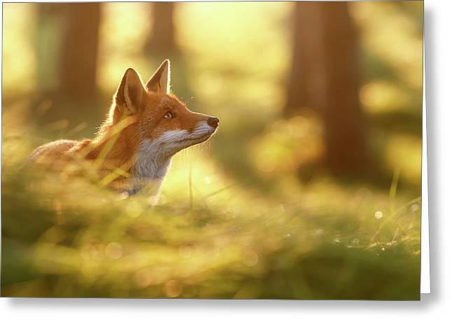 Fox Of Hope Greeting Card by Roeselien Raimond