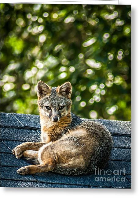 Fox On Roof Greeting Card