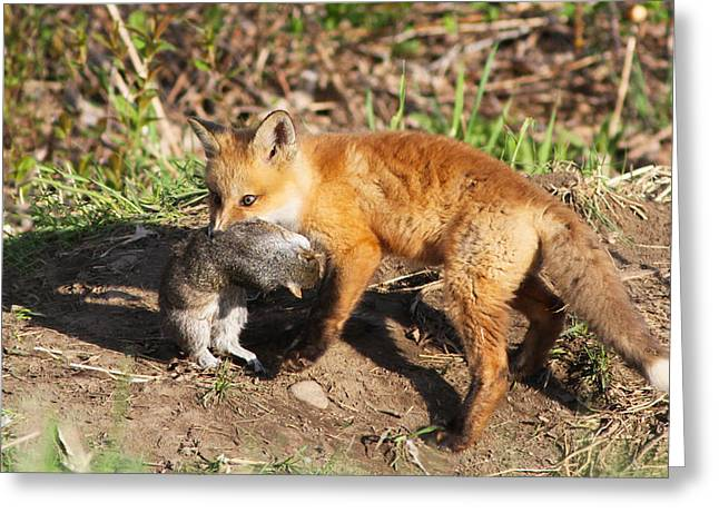 Fox Pup With Prey Greeting Card