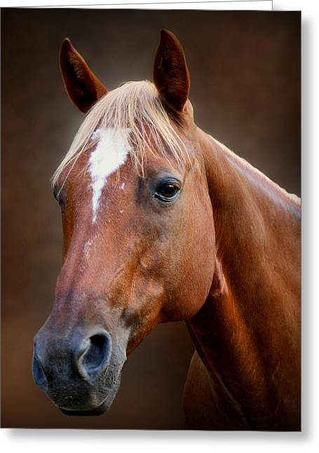 Fox - Quarter Horse Greeting Card by Sandy Keeton
