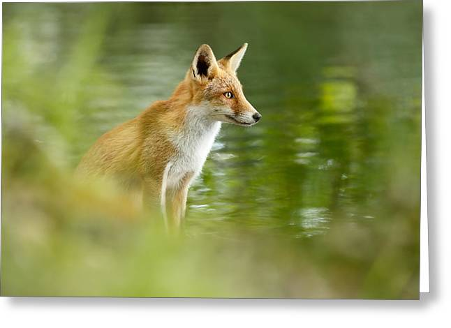 Fox Reflections Greeting Card by Roeselien Raimond